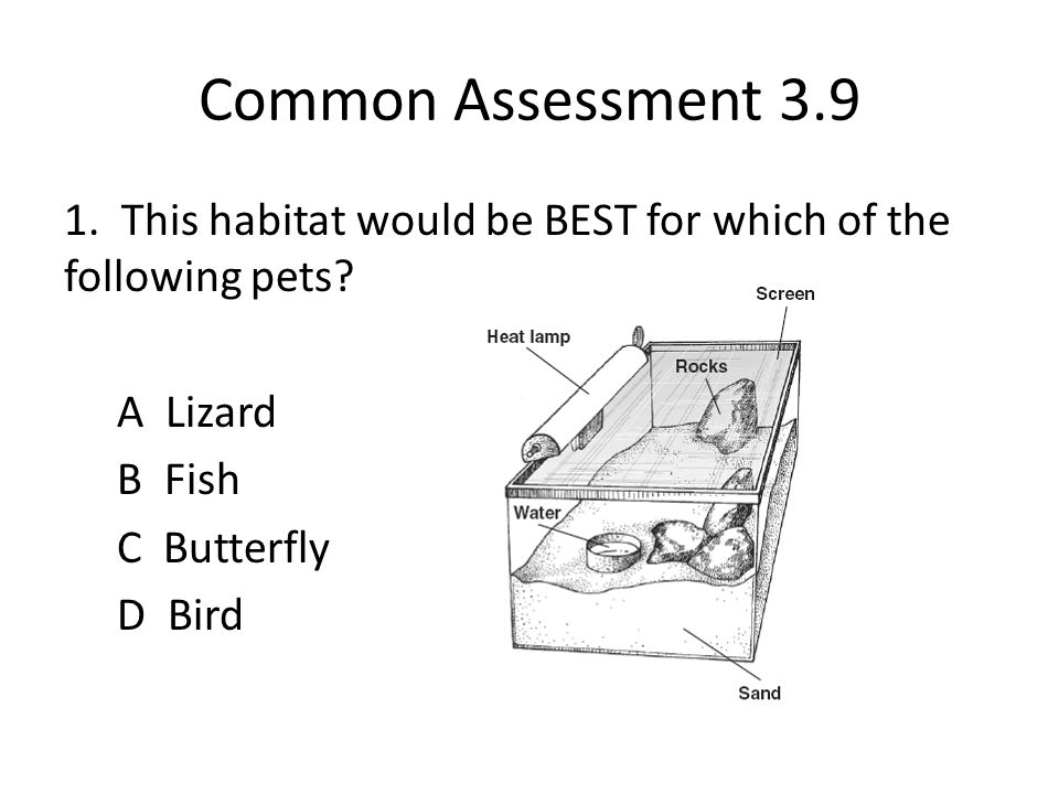 Common Assessment 3.9 1. This habitat would be BEST for which of the following pets.