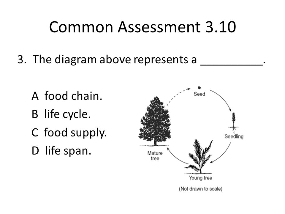 Common Assessment 3.10 3. The diagram above represents a __________.