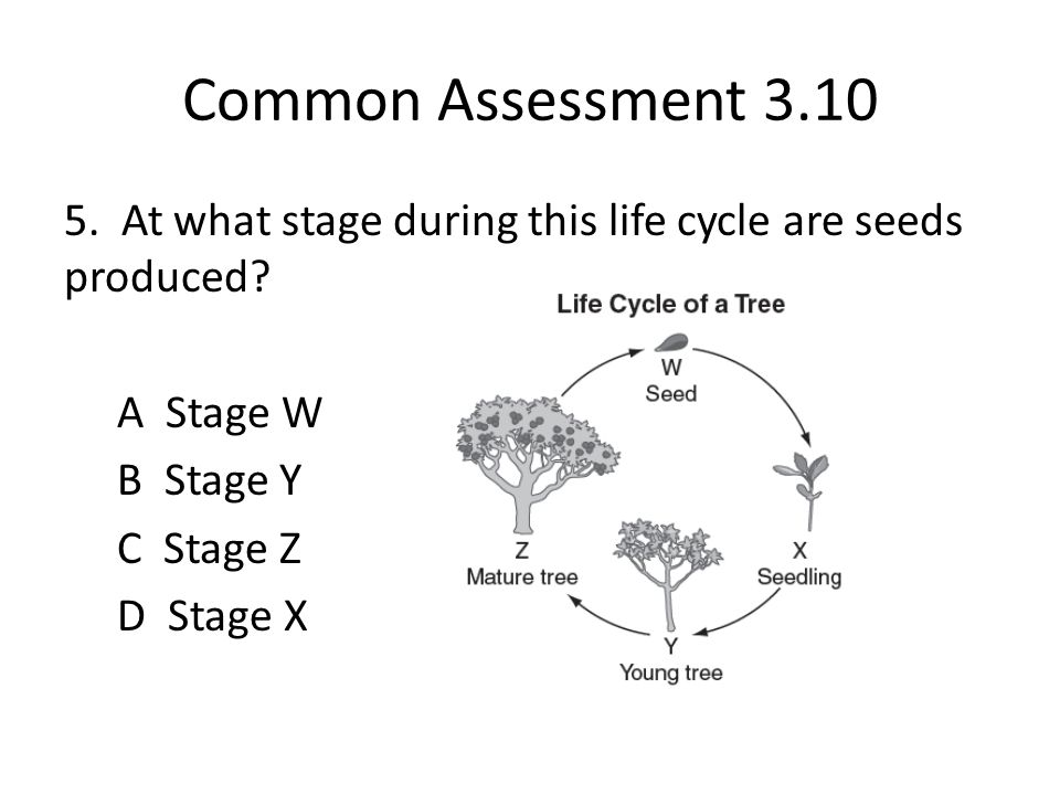 Common Assessment 3.10 5. At what stage during this life cycle are seeds produced.