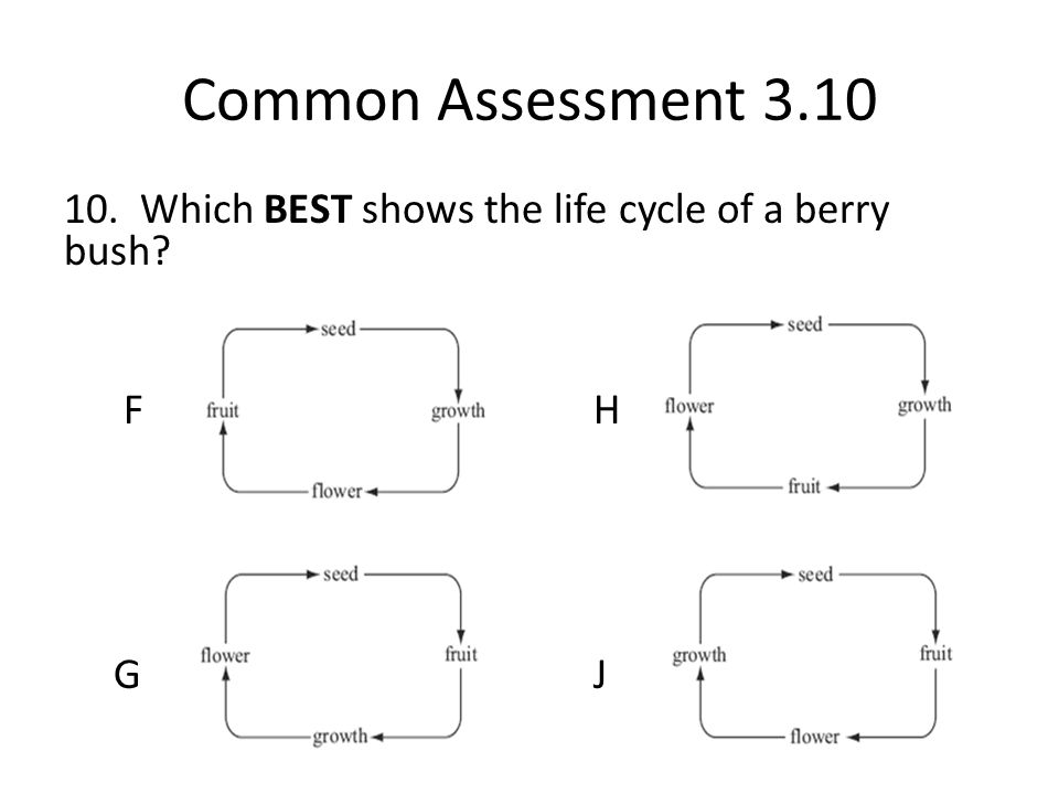 Common Assessment 3.10 10. Which BEST shows the life cycle of a berry bush F H G J