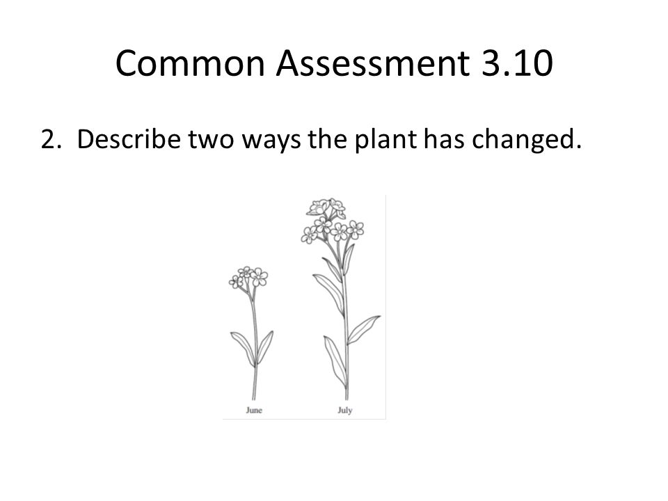 Common Assessment 3.10 2. Describe two ways the plant has changed.