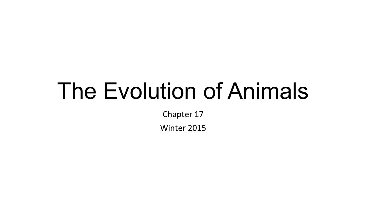 The Evolution of Animals
