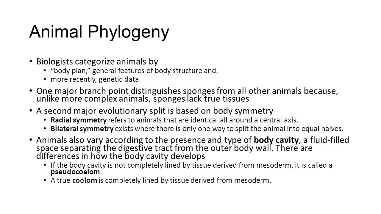 Animal Phylogeny Biologists categorize animals by
