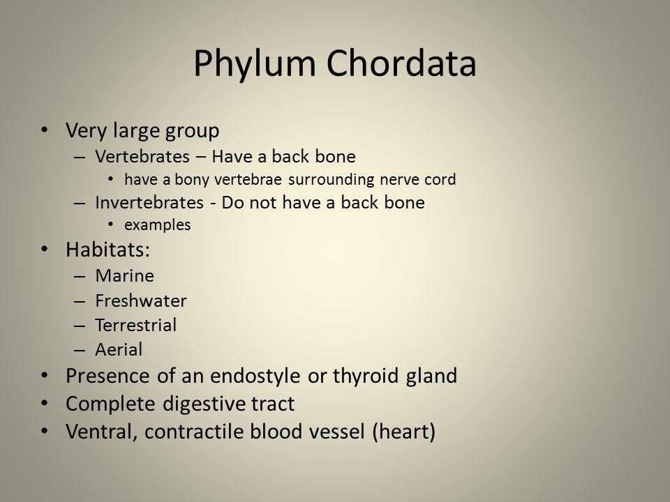 Phylum Chordata Very large group Habitats: