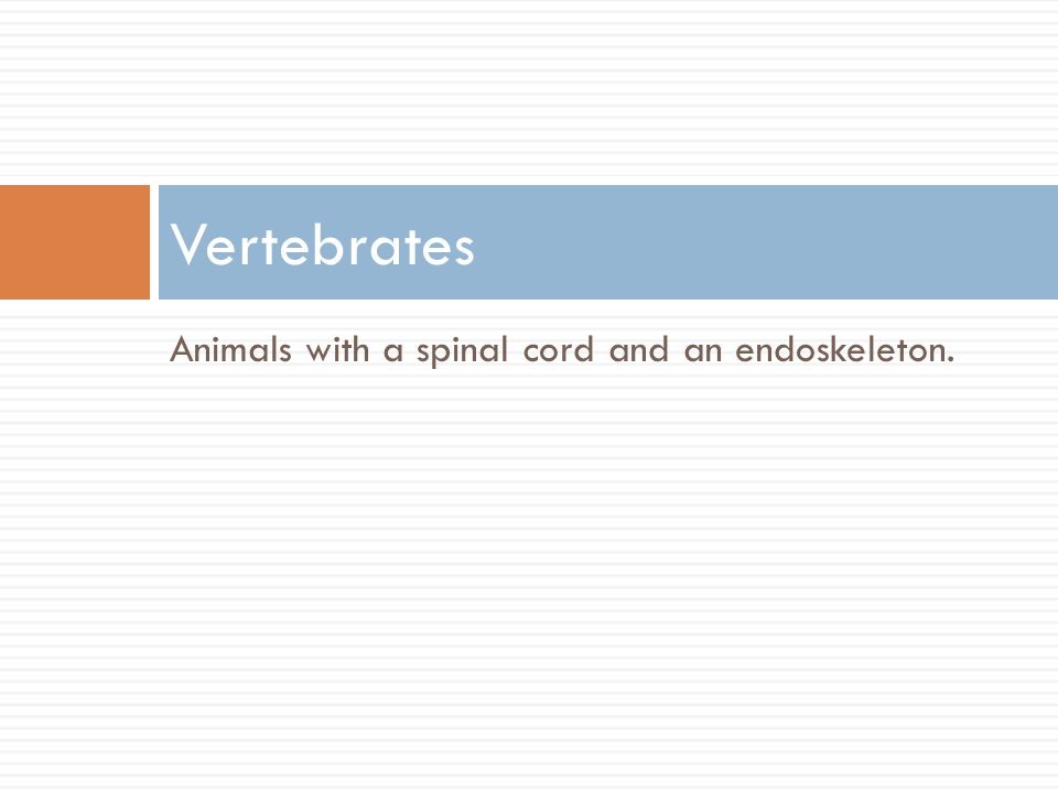 Vertebrates Animals with a spinal cord and an endoskeleton.