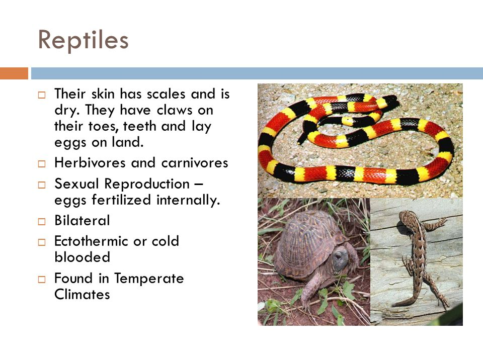 Reptiles Their skin has scales and is dry. They have claws on their toes, teeth and lay eggs on land.
