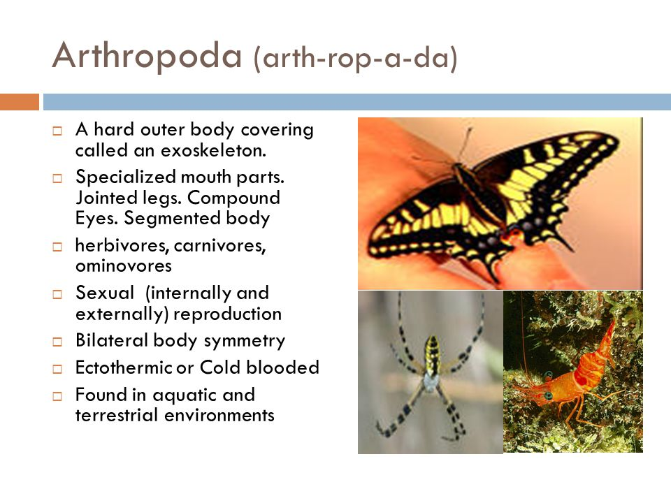 Arthropoda (arth-rop-a-da)