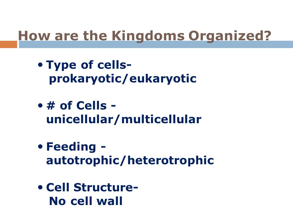 How are the Kingdoms Organized