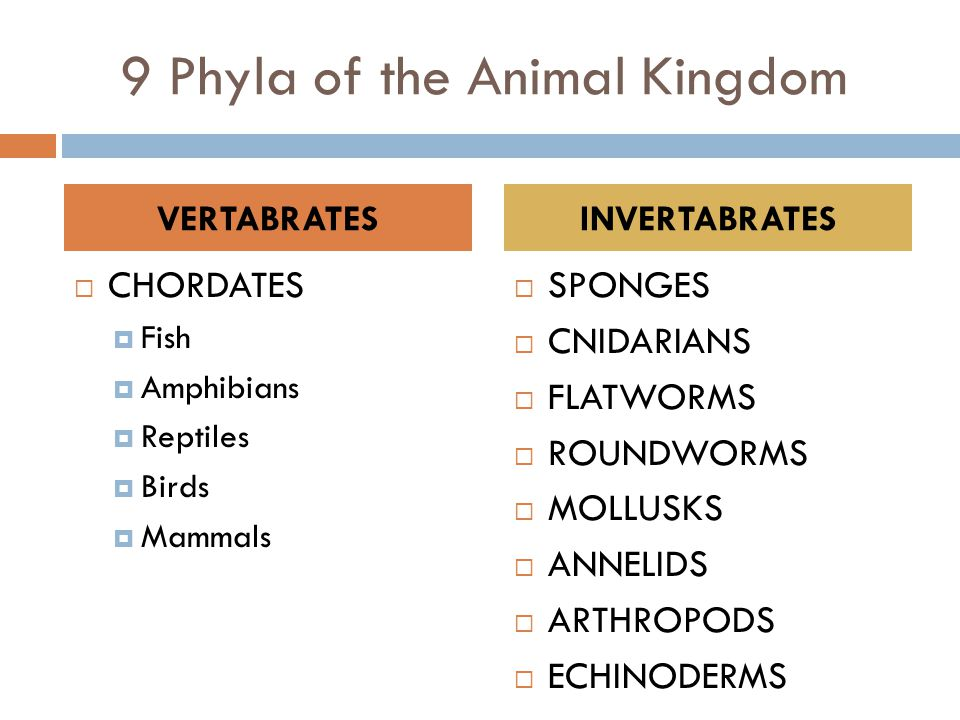 9 Phyla of the Animal Kingdom