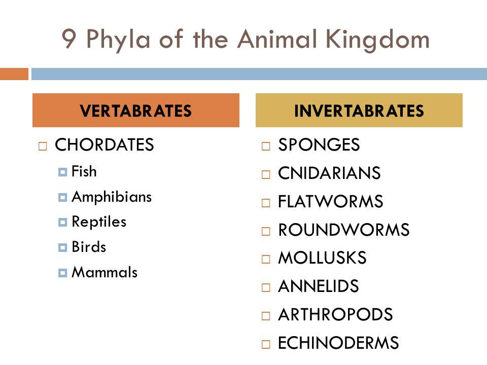 9 Phyla of the Animal Kingdom