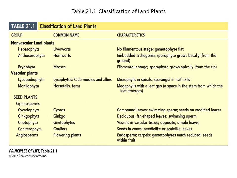 Table 21.1 Classification of Land Plants