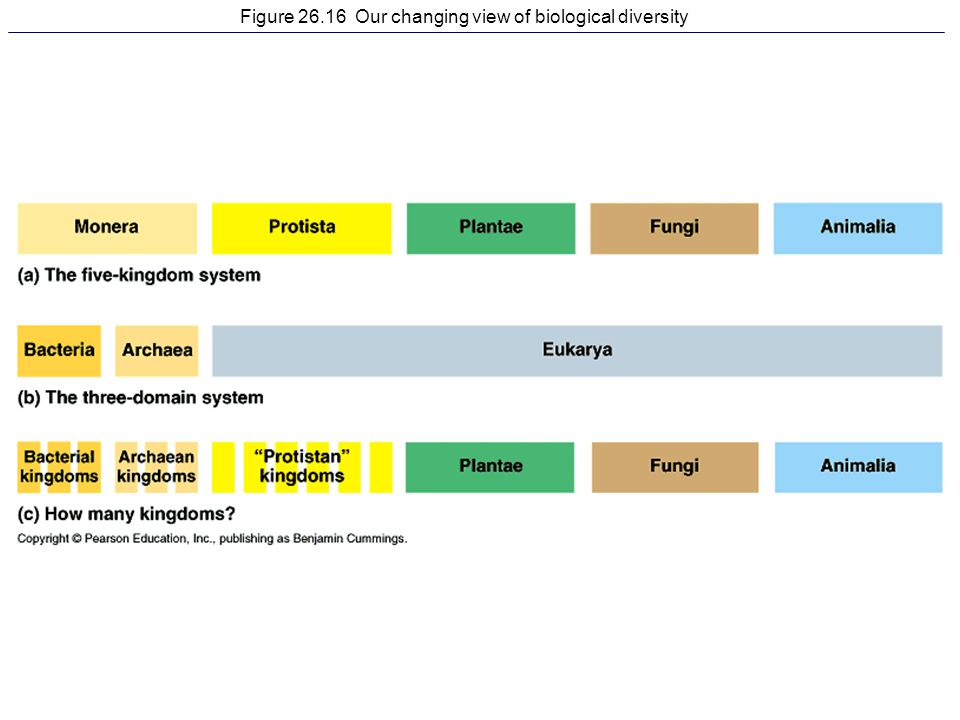 Figure 26.16 Our changing view of biological diversity