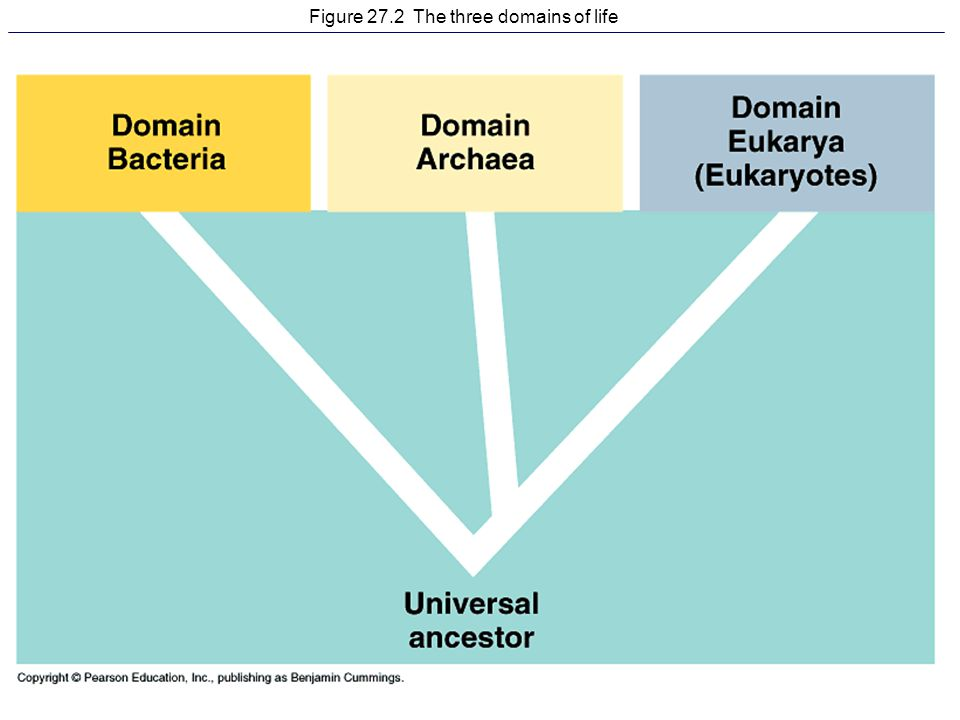 Figure 27.2 The three domains of life