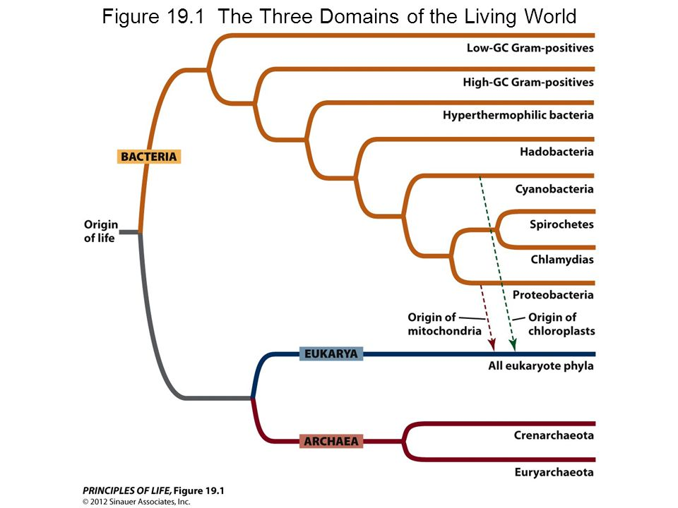 Figure 19.1 The Three Domains of the Living World