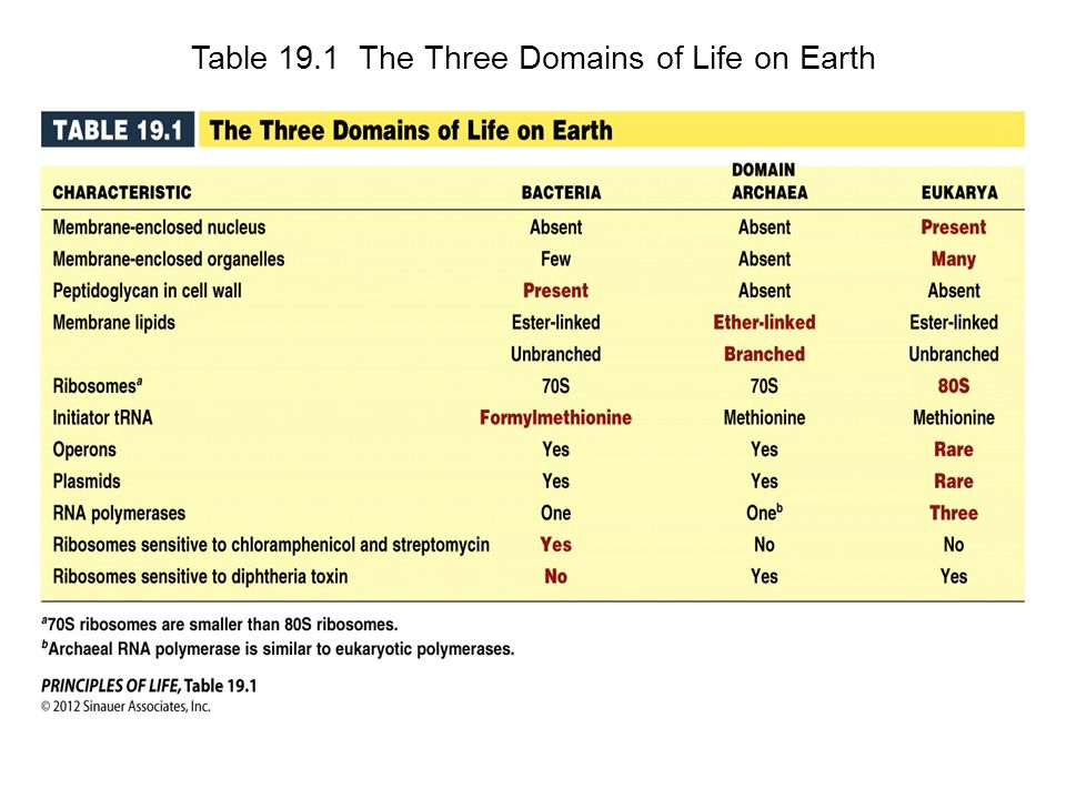 Table 19.1 The Three Domains of Life on Earth