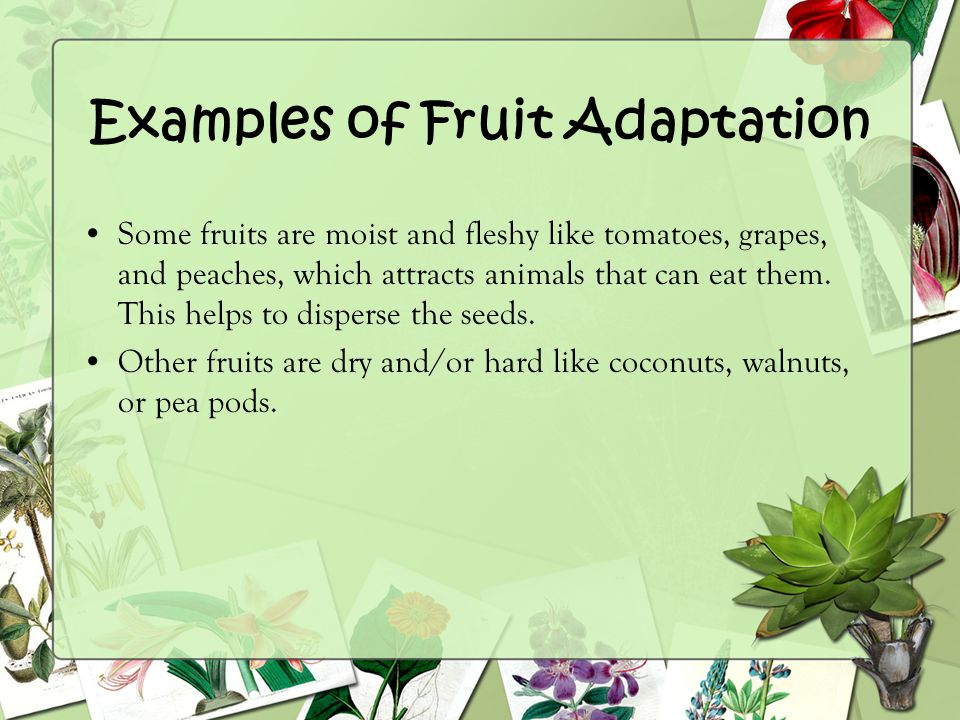 Examples of Fruit Adaptation