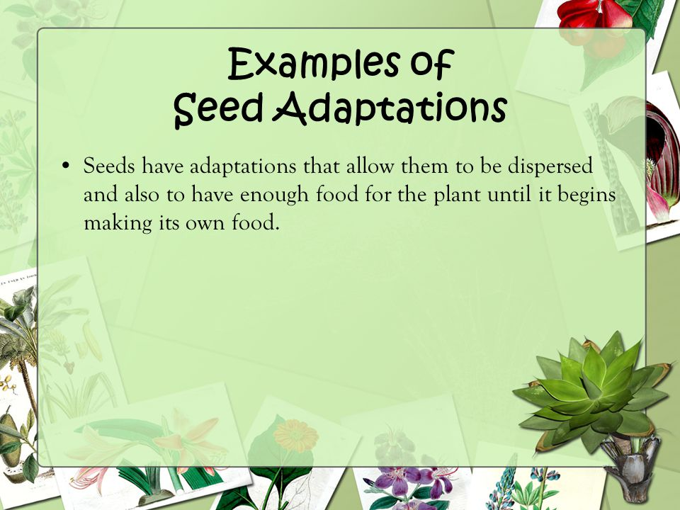 Examples of Seed Adaptations