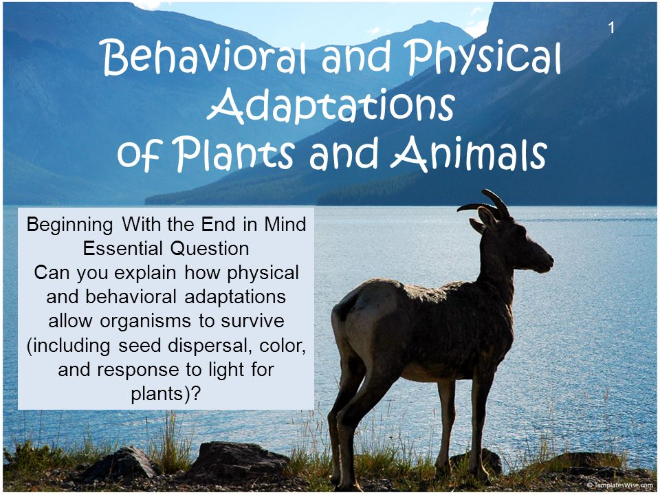 Behavioral and Physical Adaptations of Plants and Animals