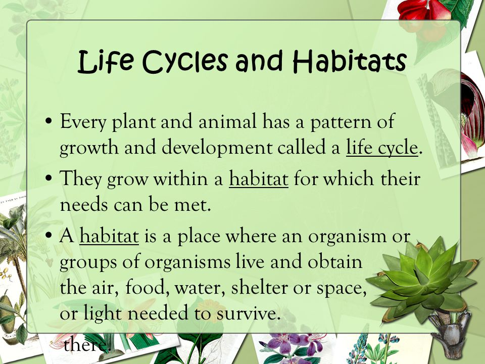 Life Cycles and Habitats