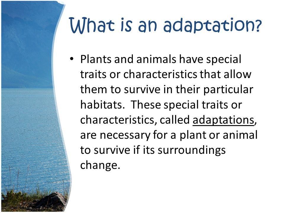What is an adaptation