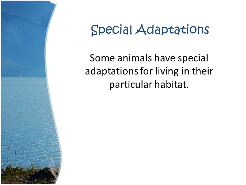 Special Adaptations Some animals have special adaptations for living in their particular habitat.