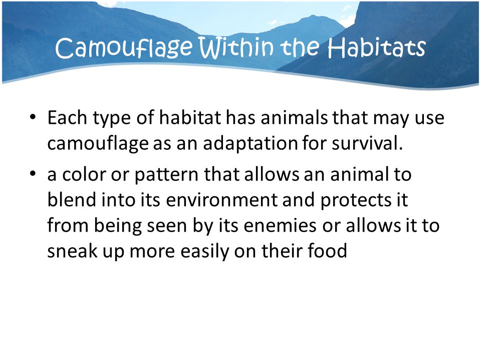 Camouflage Within the Habitats
