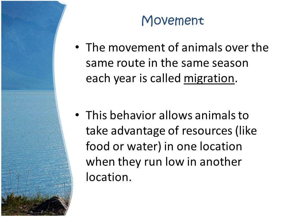 Movement The movement of animals over the same route in the same season each year is called migration.