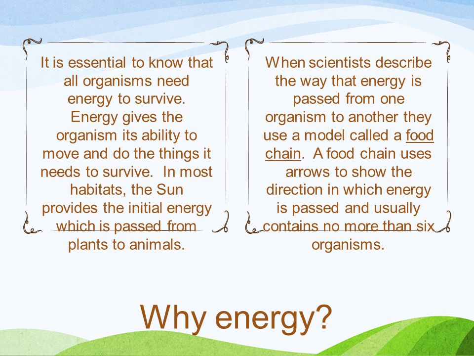 It is essential to know that all organisms need energy to survive