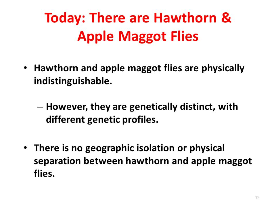 Today: There are Hawthorn & Apple Maggot Flies