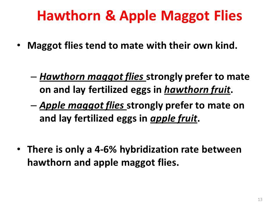 Hawthorn & Apple Maggot Flies