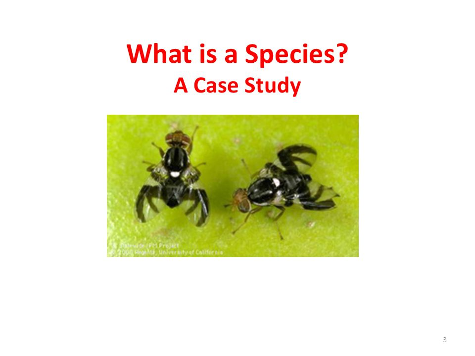 What is a Species A Case Study