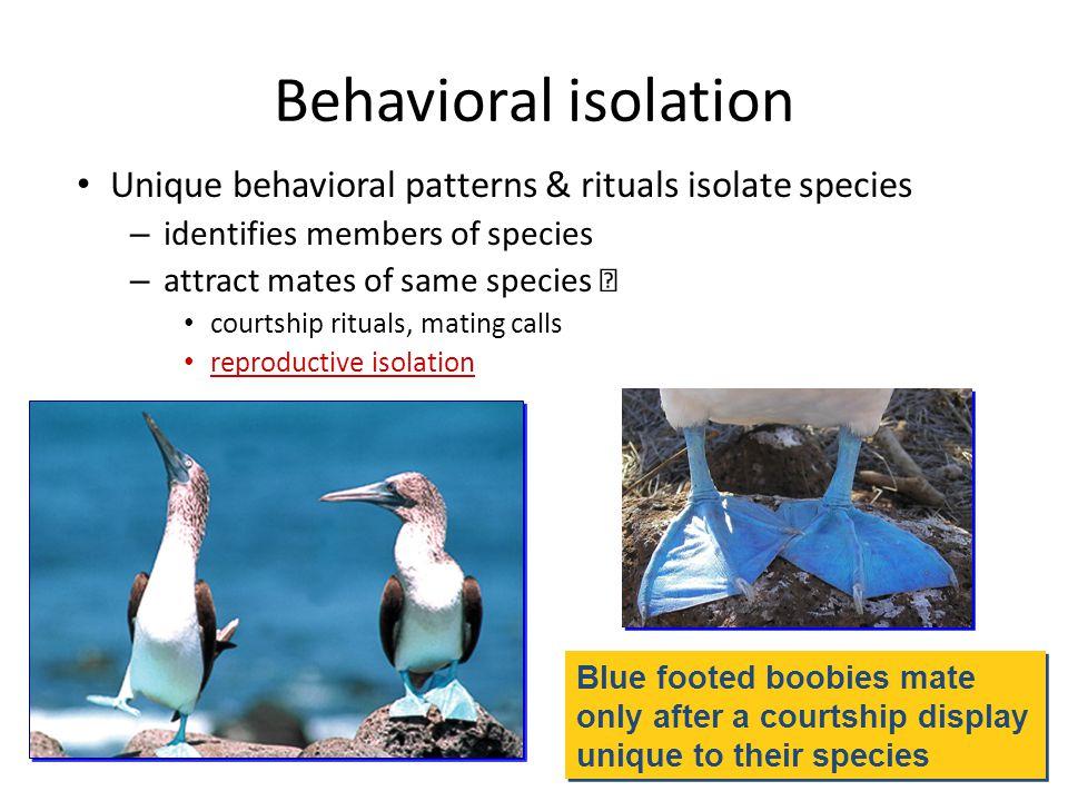 Behavioral isolation Unique behavioral patterns & rituals isolate species. identifies members of species.
