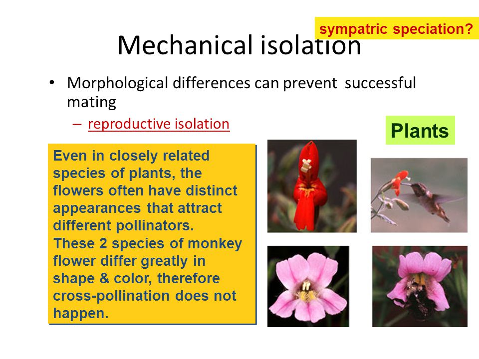 Mechanical isolation Plants