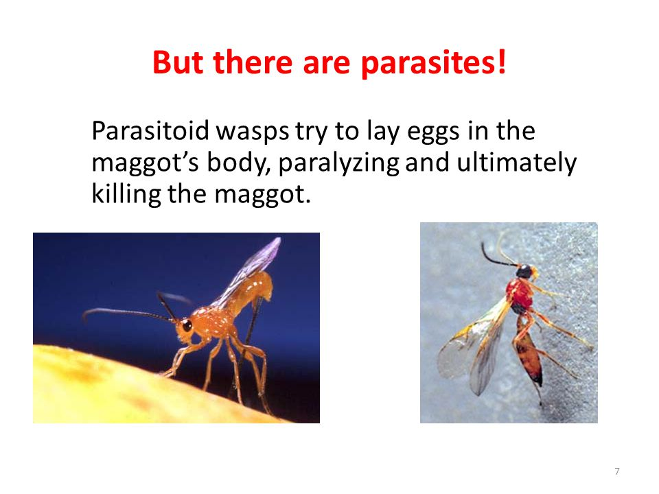 But there are parasites!