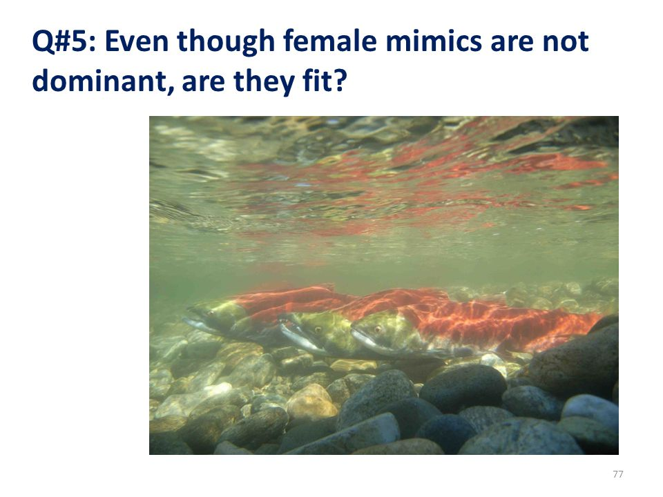 Q#5: Even though female mimics are not dominant, are they fit