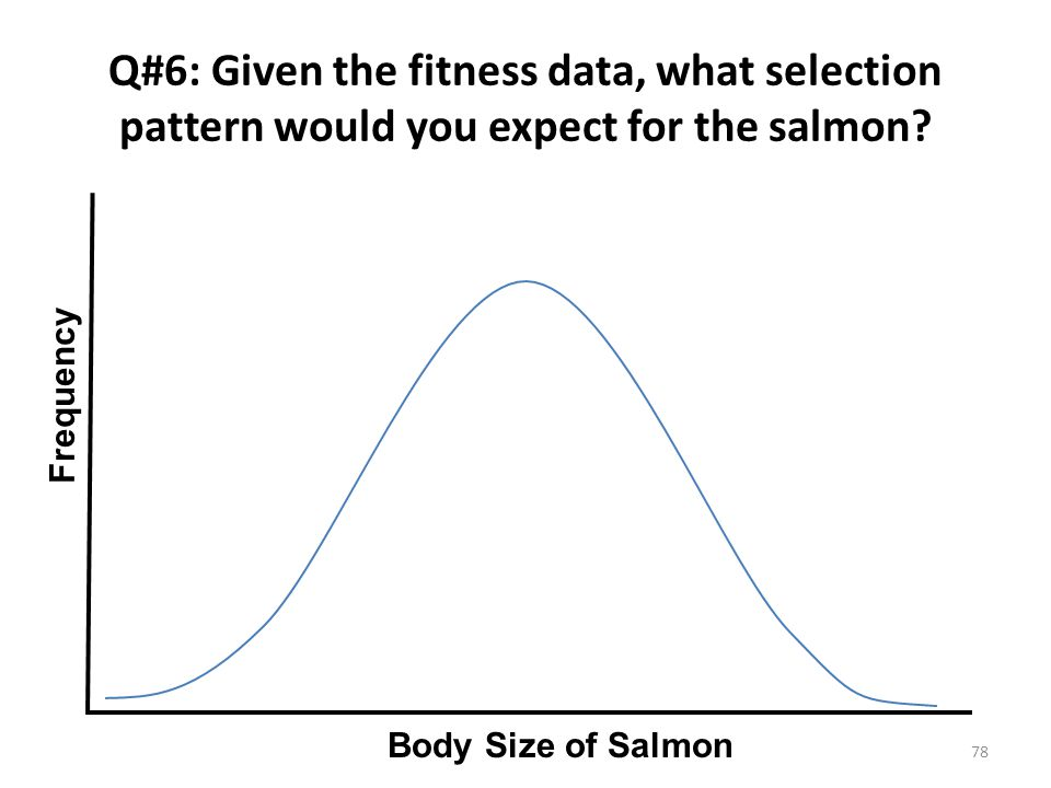 Q#6: Given the fitness data, what selection pattern would you expect for the salmon