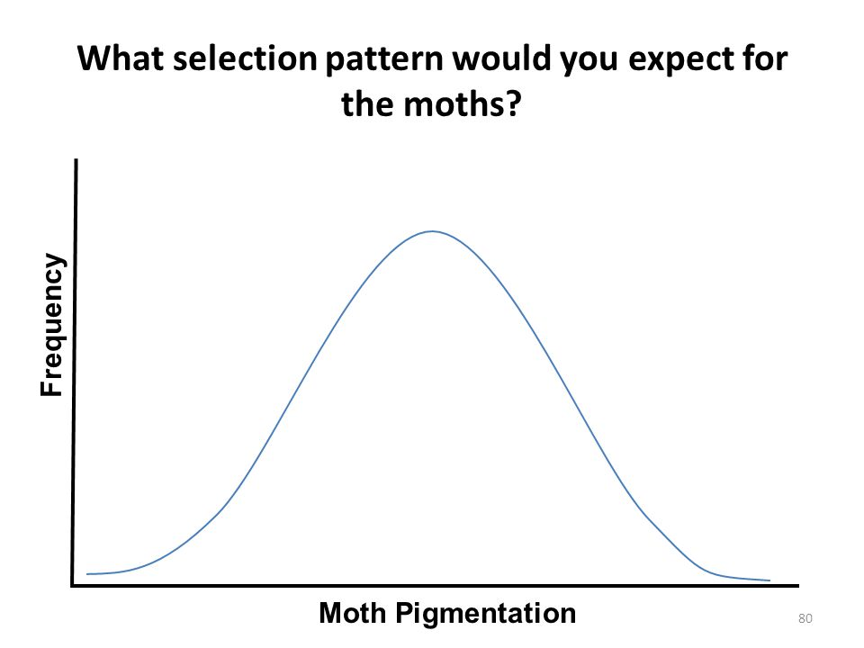 What selection pattern would you expect for the moths