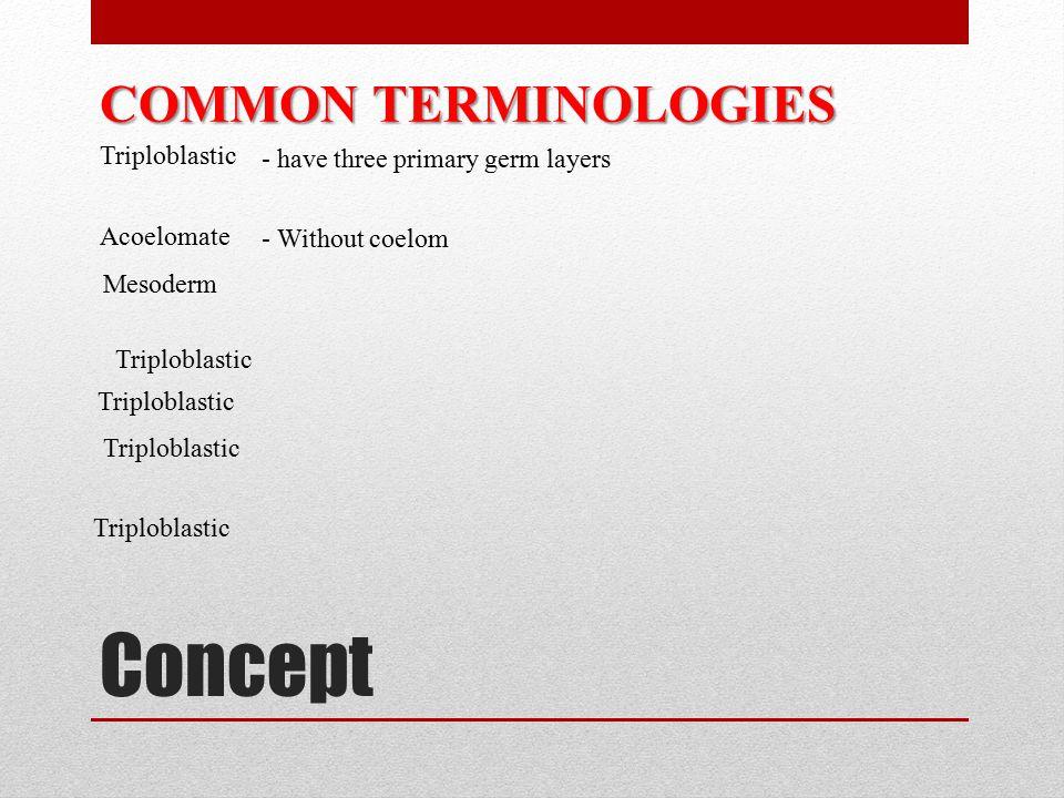 Concept COMMON TERMINOLOGIES Triploblastic