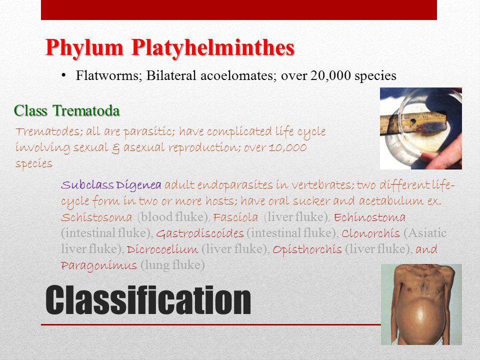 Classification Phylum Platyhelminthes Class Trematoda