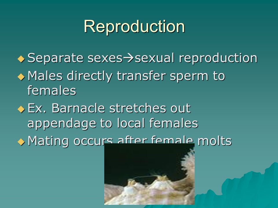 Reproduction Separate sexessexual reproduction