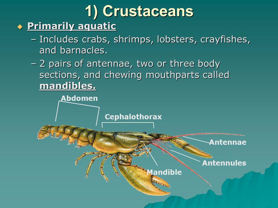 1) Crustaceans Primarily aquatic