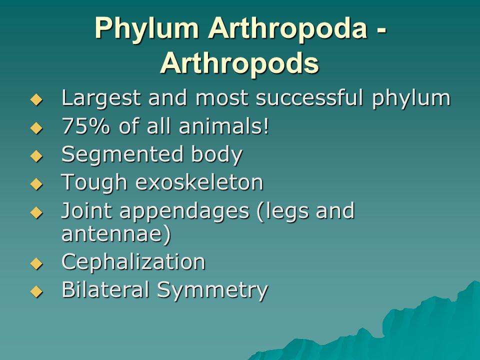 Phylum Arthropoda - Arthropods