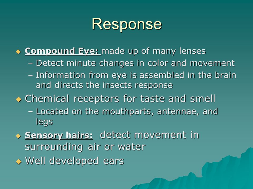 Response Chemical receptors for taste and smell Well developed ears