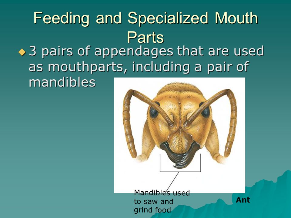 Feeding and Specialized Mouth Parts