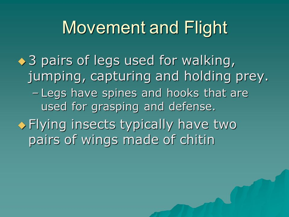 Movement and Flight 3 pairs of legs used for walking, jumping, capturing and holding prey.