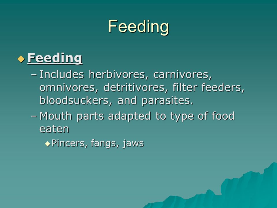 Feeding Feeding. Includes herbivores, carnivores, omnivores, detritivores, filter feeders, bloodsuckers, and parasites.
