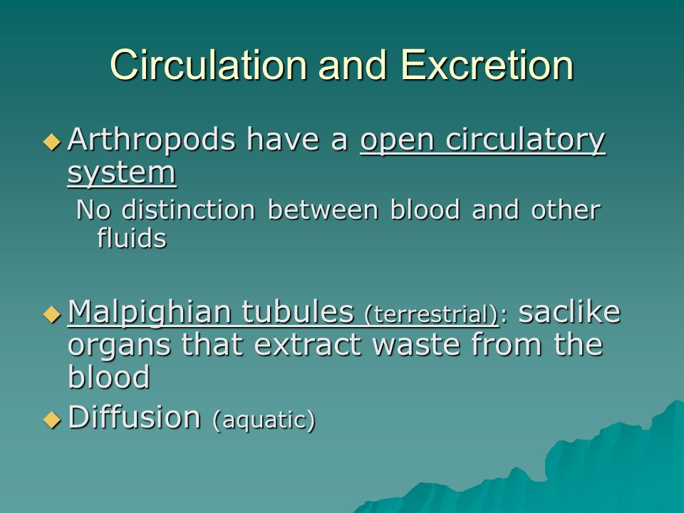 Circulation and Excretion