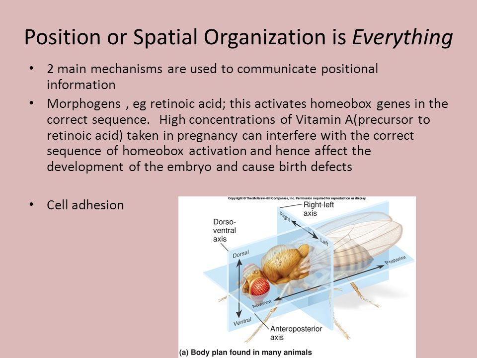 Position or Spatial Organization is Everything