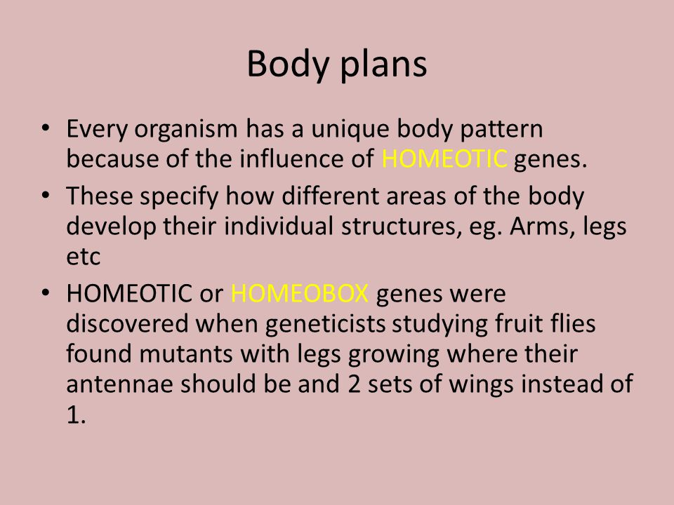 Body plans Every organism has a unique body pattern because of the influence of HOMEOTIC genes.