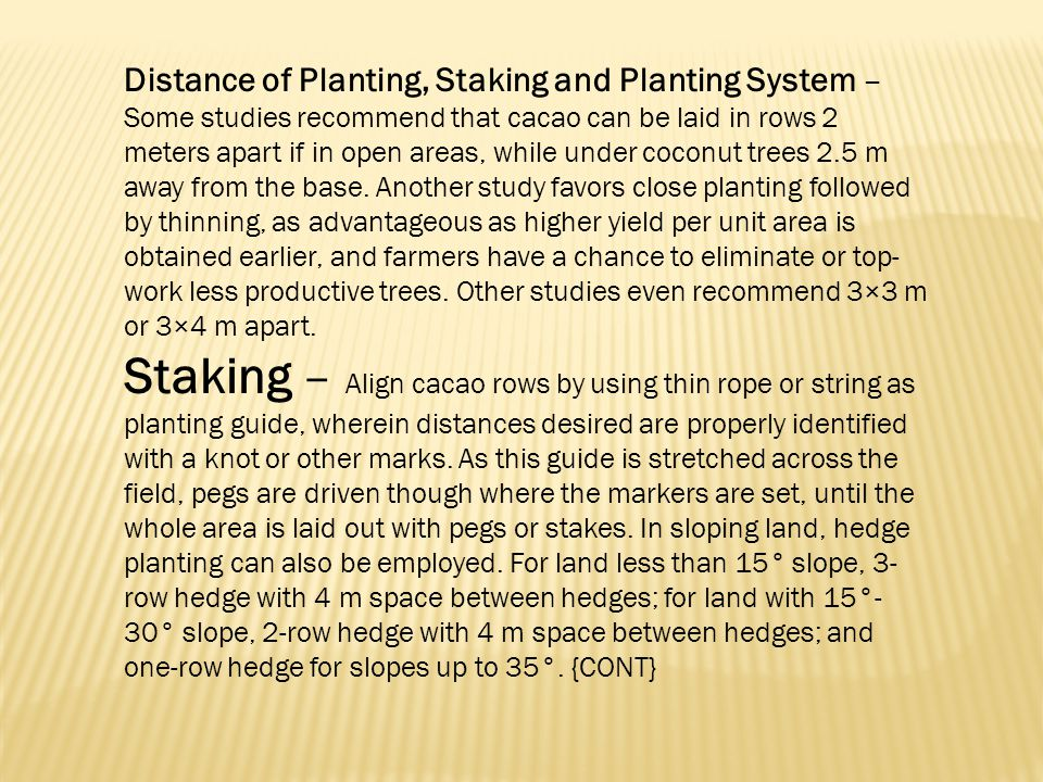 Distance of Planting, Staking and Planting System – Some studies recommend that cacao can be laid in rows 2 meters apart if in open areas, while under coconut trees 2.5 m away from the base. Another study favors close planting followed by thinning, as advantageous as higher yield per unit area is obtained earlier, and farmers have a chance to eliminate or top-work less productive trees. Other studies even recommend 3×3 m or 3×4 m apart.